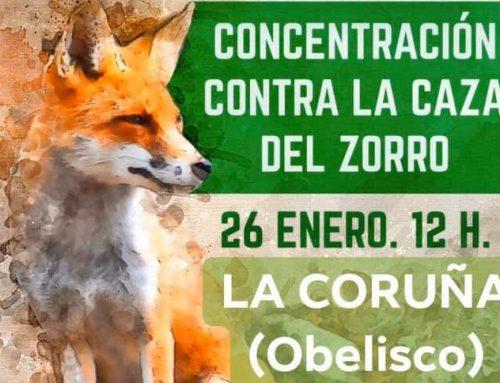 APADAN apoya la concentración en contra de la caza del zorro